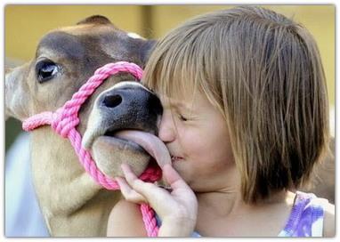 Почему люди так любят животных